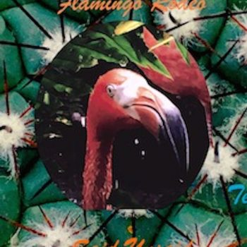 "Well Said: A Review of Flamingo Rodeo's ""Said Unsaid"""